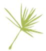 flower_pistache_alone-anjayati-specialiste-du-bien-etre